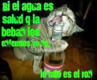 imagen de gatito