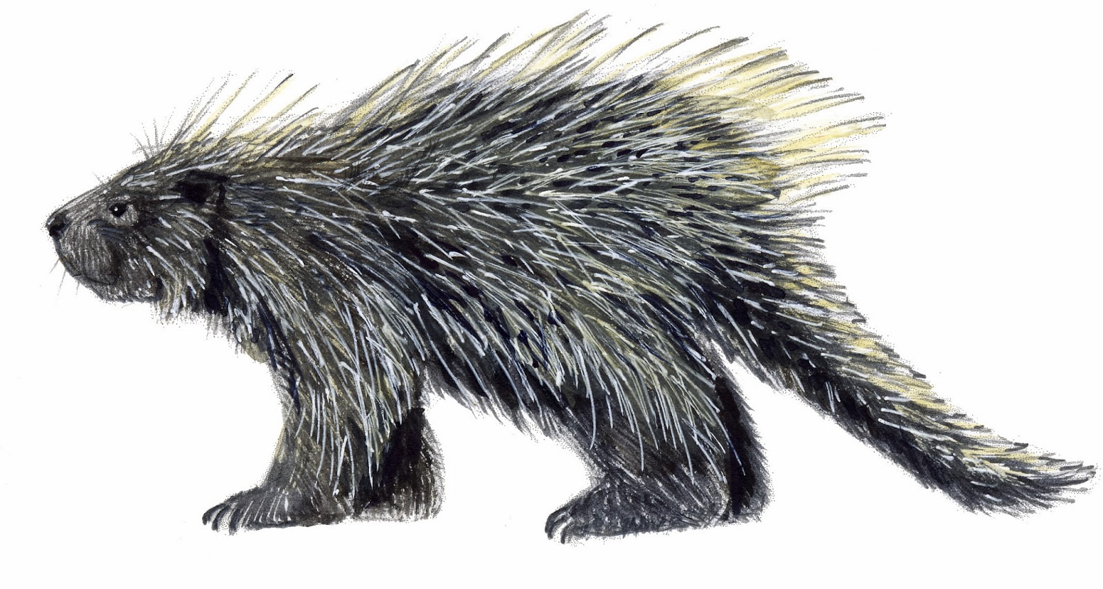 This porcupine was actually in my fucking pants... LoL