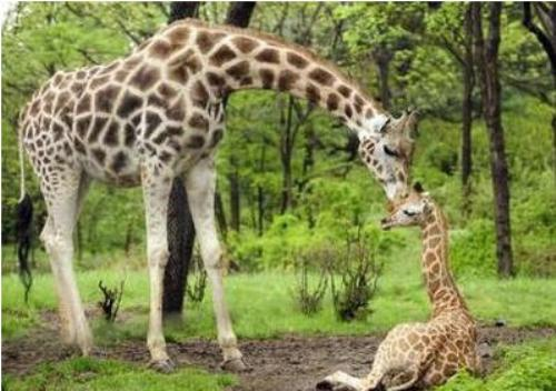 The Best Travelling: Bronx Zoo Wildlife Conservation Park ... Bronx Zoo Animals