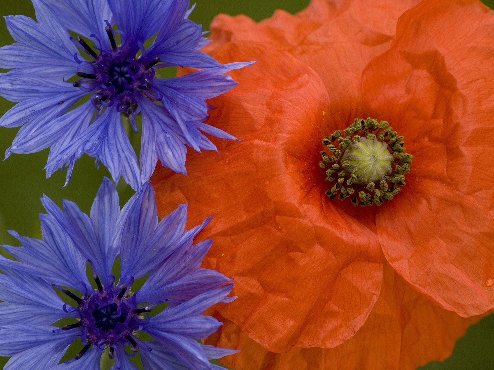 http://1.bp.blogspot.com/-MDu133WNtv0/TtEHIriWYaI/AAAAAAAAXDw/HedpZ40ICAU/s1600/Natural+Photography+%25283%2529.jpg