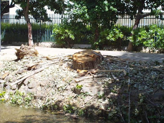 Αλλού διαμαρτύρονται και εδώ κόβουν τα δέντρα σα ραδίκια