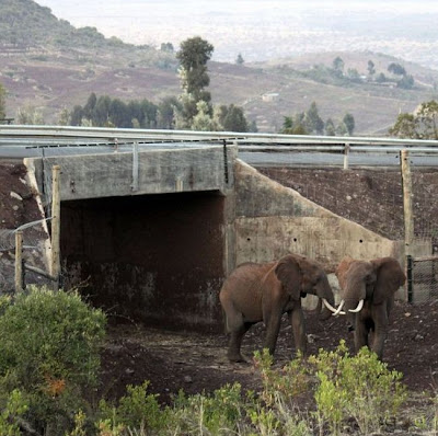 Africa's First Elephant Underpass Seen On www.coolpicturegallery.us