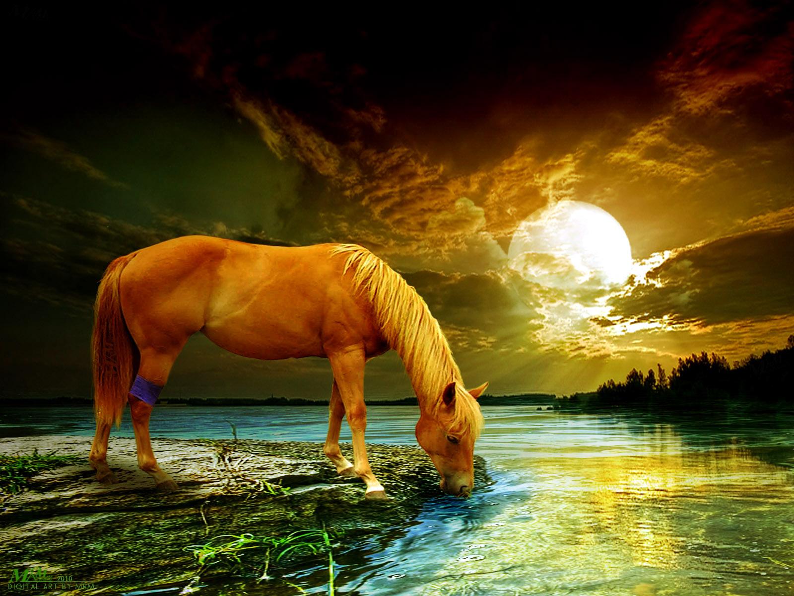http://1.bp.blogspot.com/-MEivj1TP1Wc/TaEDHyU24uI/AAAAAAAAAq4/yNbWh6I48wo/s1600/wallpaper+Horse+Landscape-Photo+Manipulation+By+Mrm.jpg