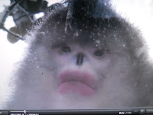 Monkey  kiss me quick