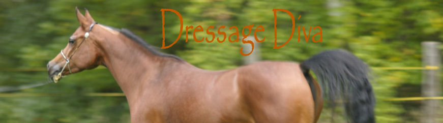 The Frugal Dressage Diva