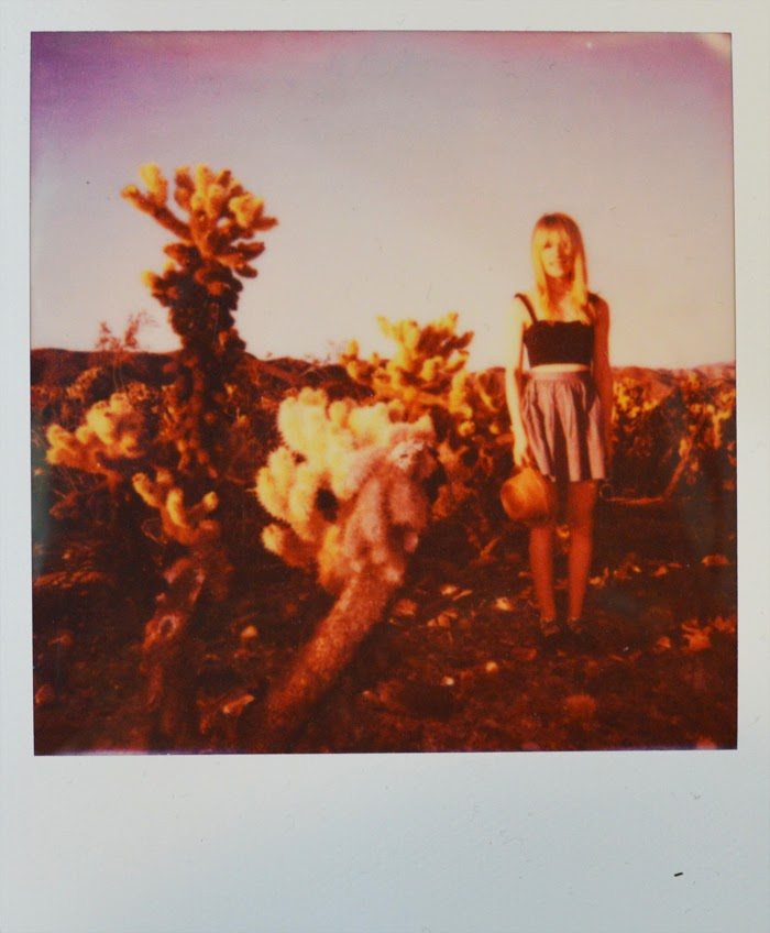 joshua tree polaroid