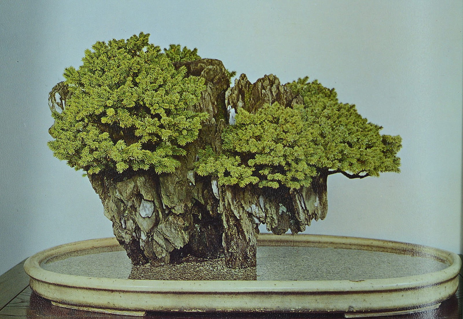 Goodstore Bonsai Book Just In