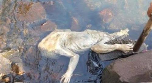 Criatura assustadora e parecida com o chupacabra é achada em rio no Paraguai