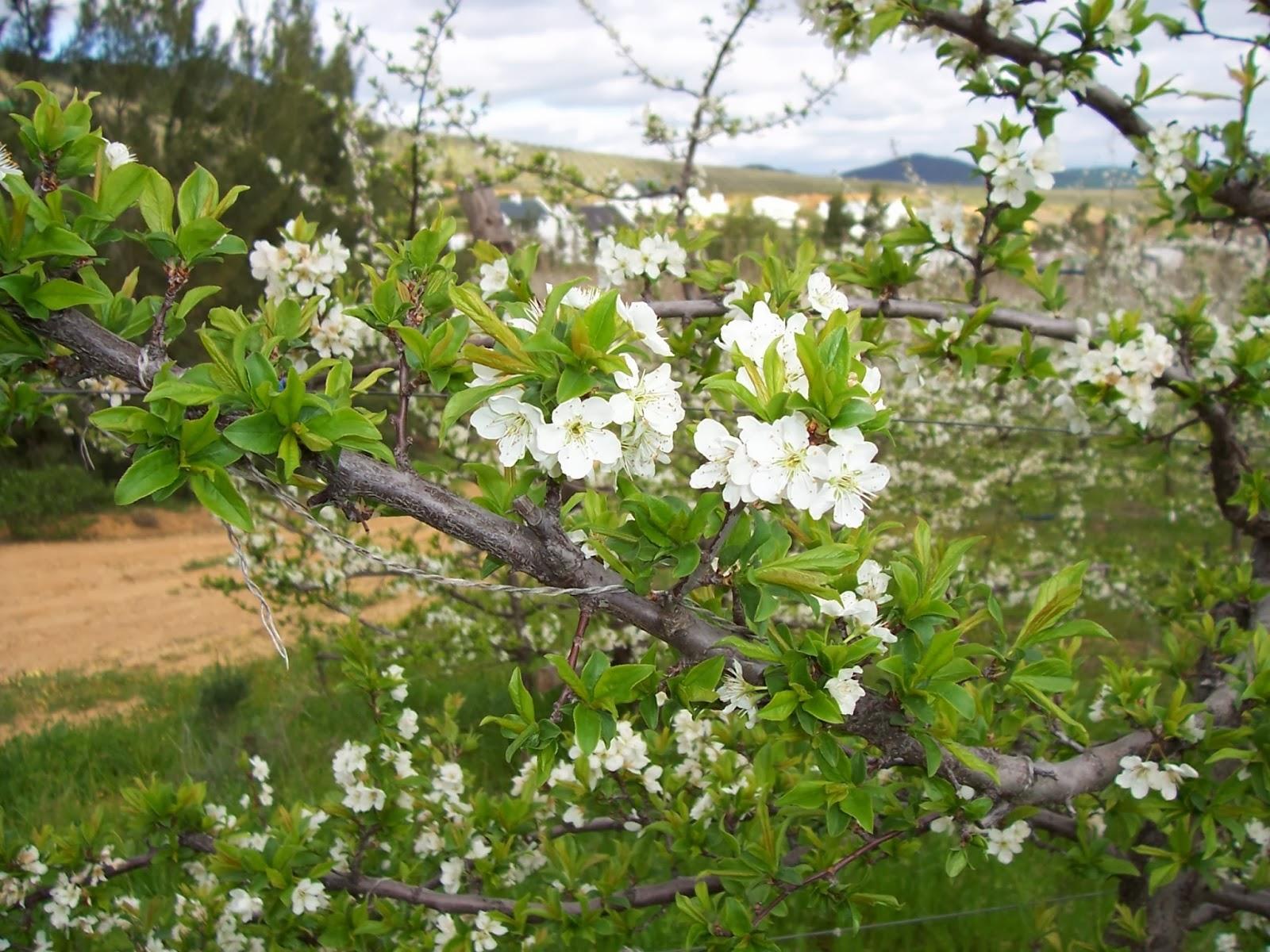 White Oleander Book Cover : Poze gradini amenajate cu flori proiecte
