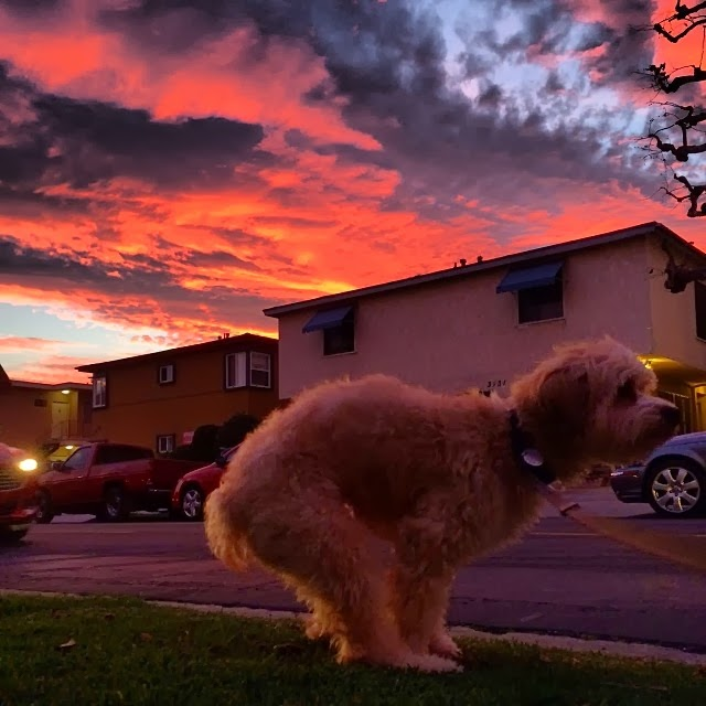 Cute dogs - part 8 (50 pics), dog ready to poop in beautiful sunrise