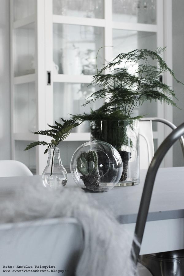 glaskupa, glaskupr, vas, glödlampa, vaser, växt, växter, grönt, fjädersparris, favoriter, favorit, kaktus, kaktusar, kök, köket, kökets, inredning, inredningsblogg, blogg, bloggar, annelie palmqvist