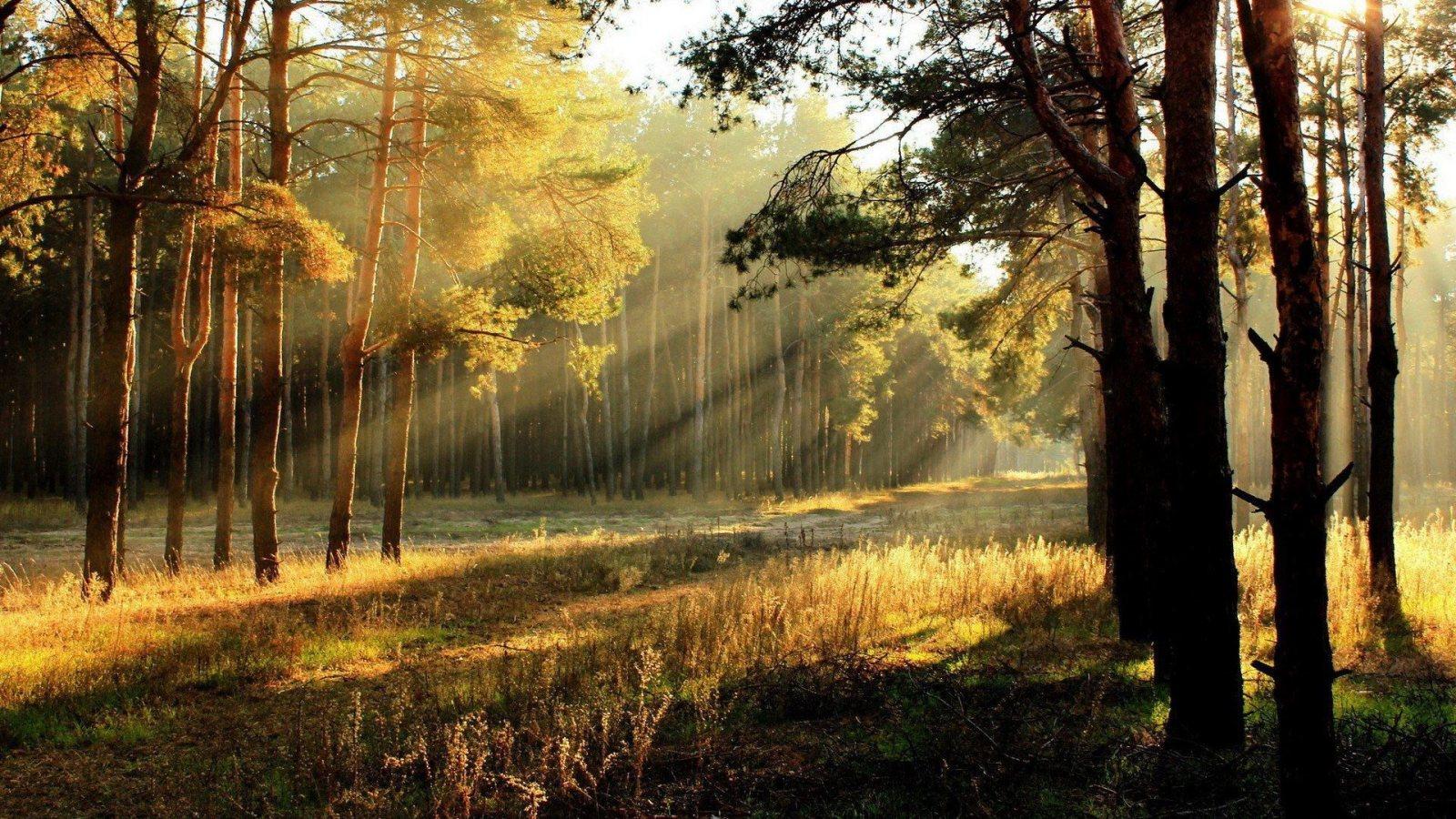 http://1.bp.blogspot.com/-MGL1tJ1cu7M/UGcW3wYaIdI/AAAAAAAAHJU/krdCFrPsxhA/s1600/sun-rays-through-forest-trees-1600x900.jpg
