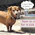 Πώς θεραπεύουμε σκύλο με στομαχική διαταραχή;...