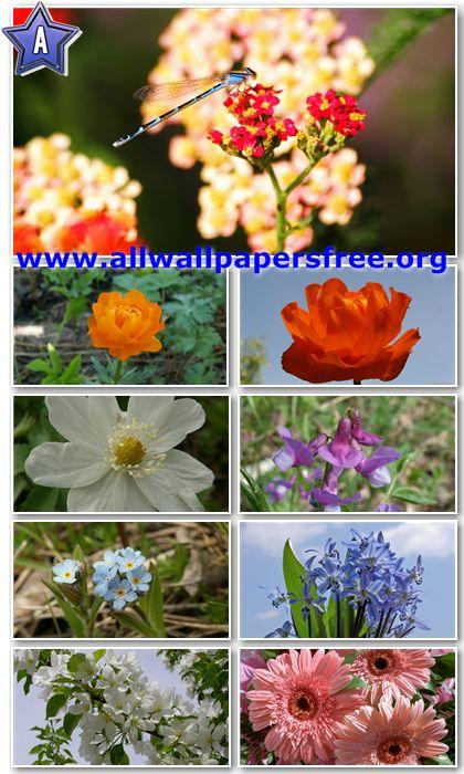 30 Beautiful Flowers HD Wallpapers 1366 X 768 [Set 8]