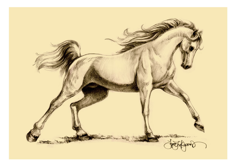Running arabian horse drawing - photo#1