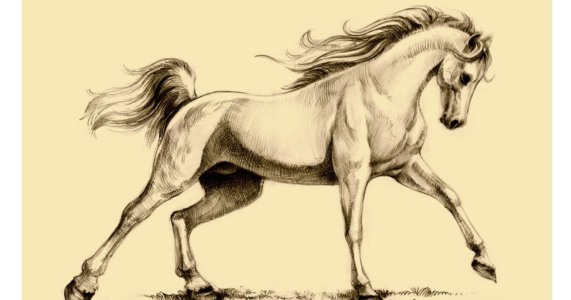 how to draw an arabian horse