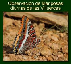 http://iberian-nature.blogspot.com.es/p/ruta-tematica-mariposas-diurnas-de-las.html