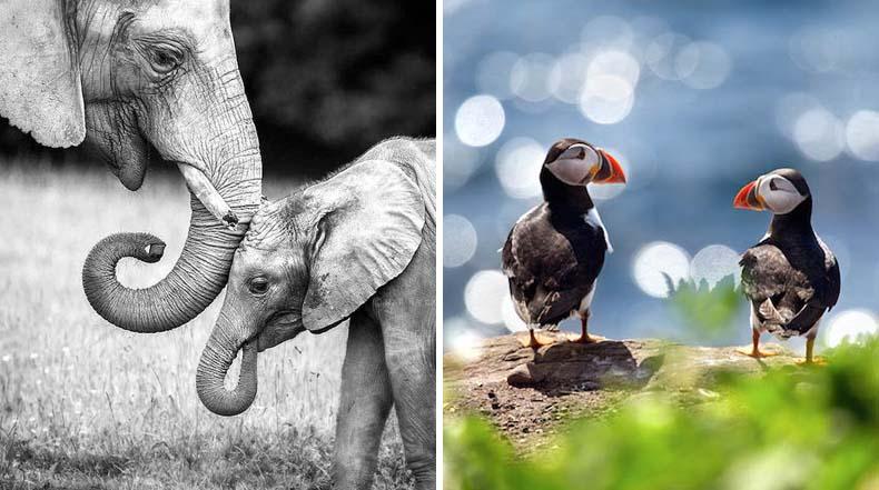 Impresionantes fotos de Marina Cano capturan la belleza majestuosa de la vida silvestre
