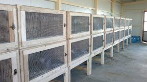 Клетки за заици