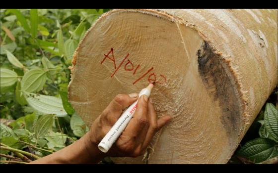 WWF : Deklarasi Ekspor Langkah Mundur Penerapan Sistem Legalitas Kayu