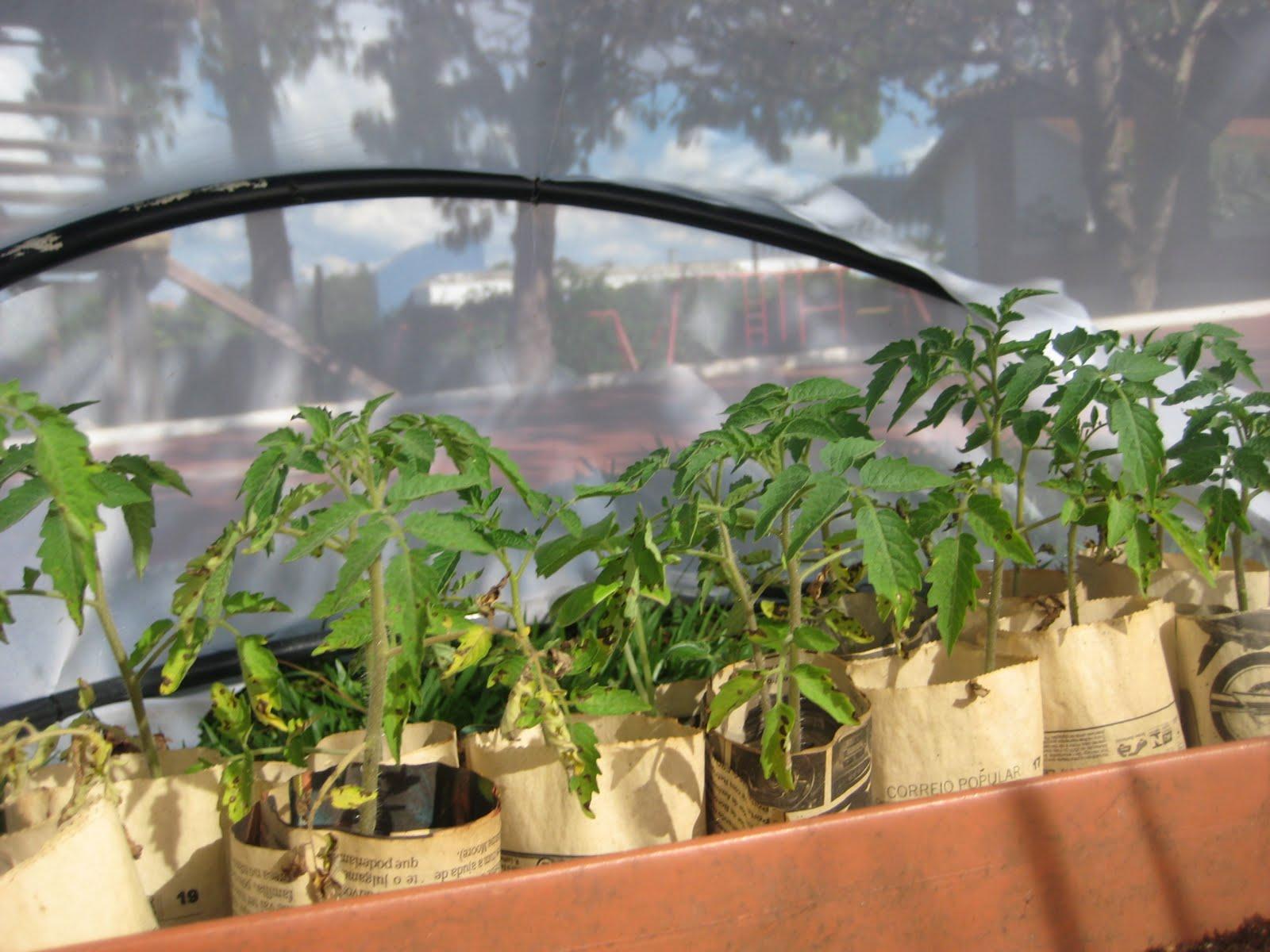Estufa horta na escola do s tio - Estufa para habitacion pequena ...