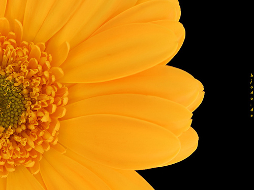 Beautiful flowers wallpapers screensavers |The Free Images