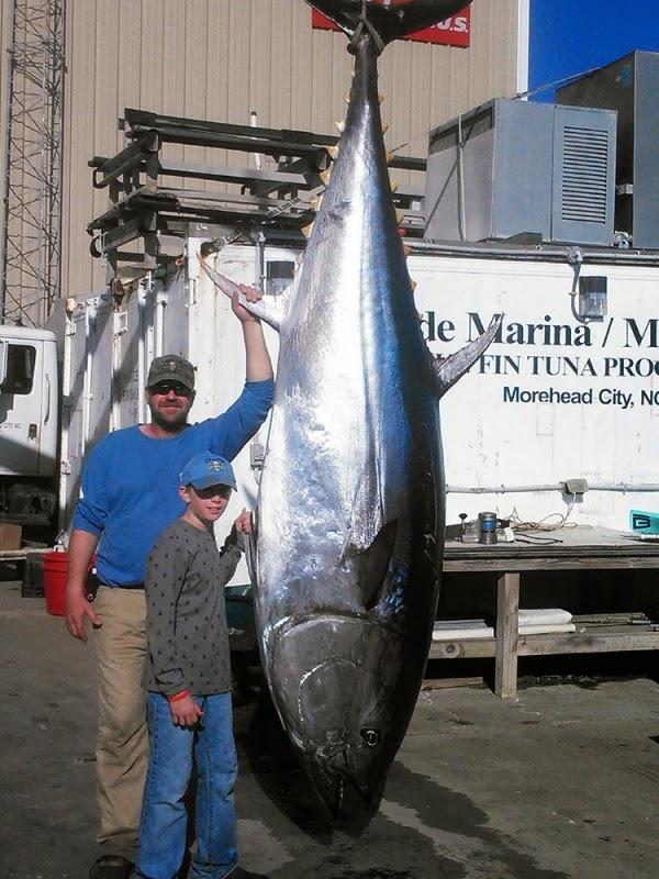 International fishing news us caught a 785 pound bluefin for Tuna fishing north carolina