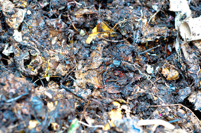 close up of contents of compost heap