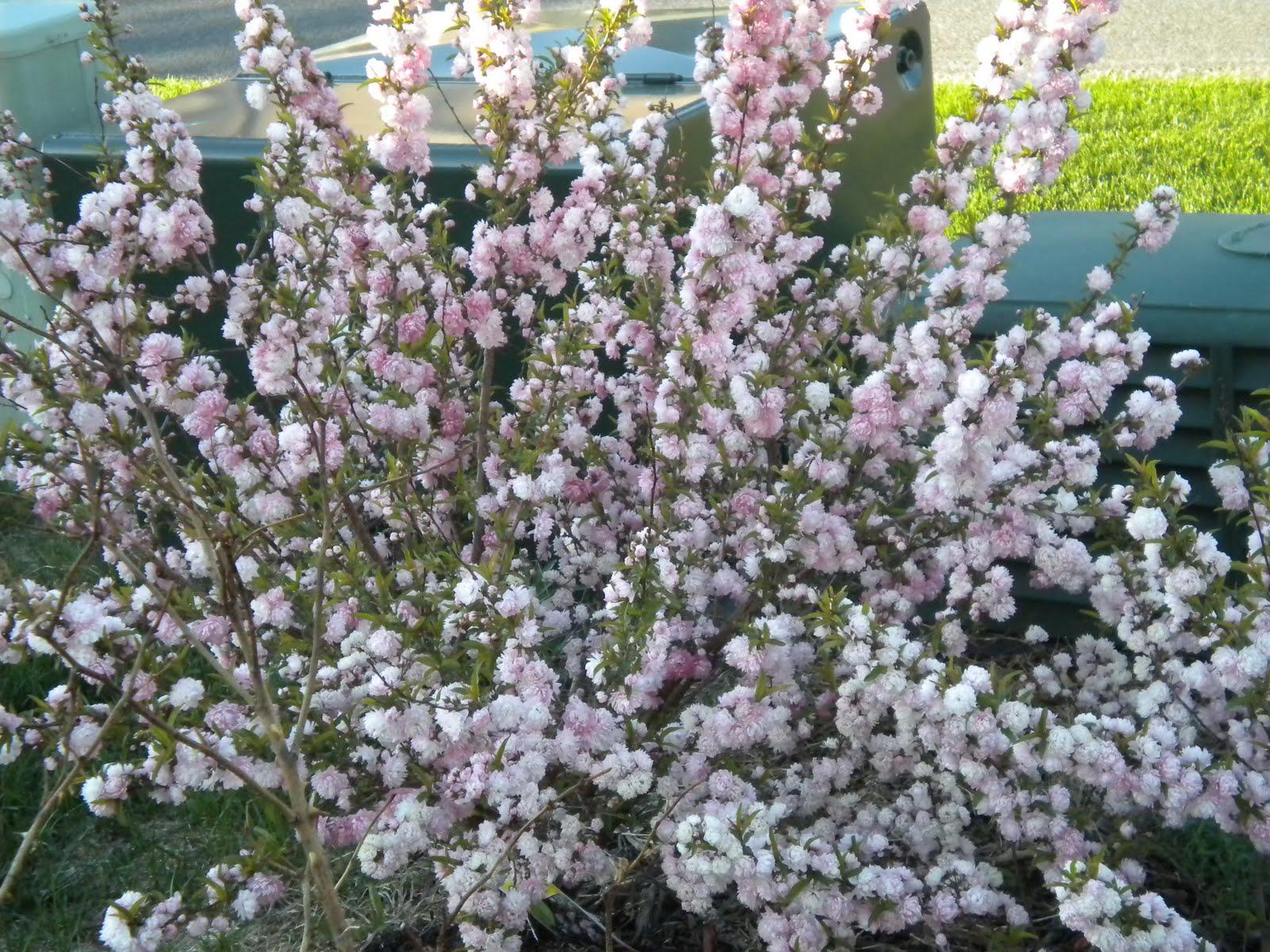 Welcome to My Random GardenZestar Apple Tree