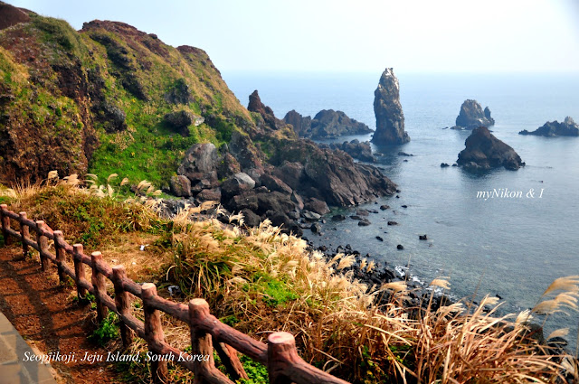 Jeju Island : Seopjikoji Romance is in the air