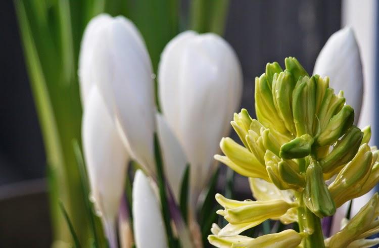Plant skønne forårsblomster i haven i kick start foråret udenfor