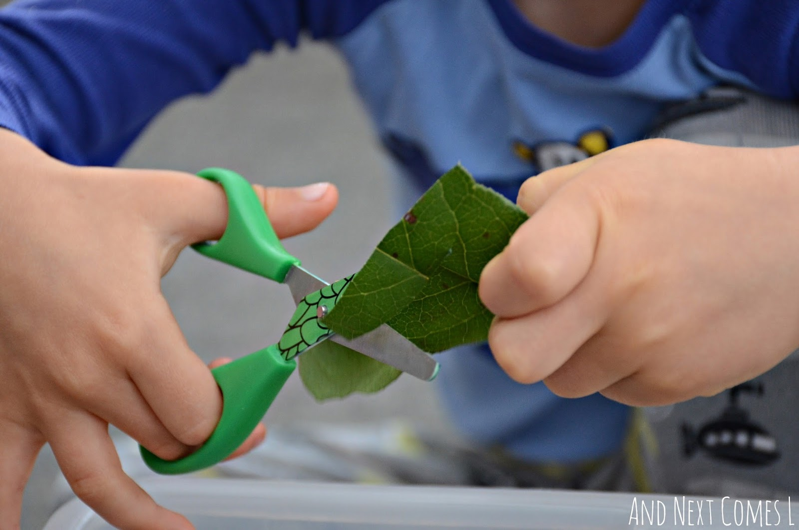 Fine motor scissor practice for toddlers and preschoolers using leaves from And Next Comes L