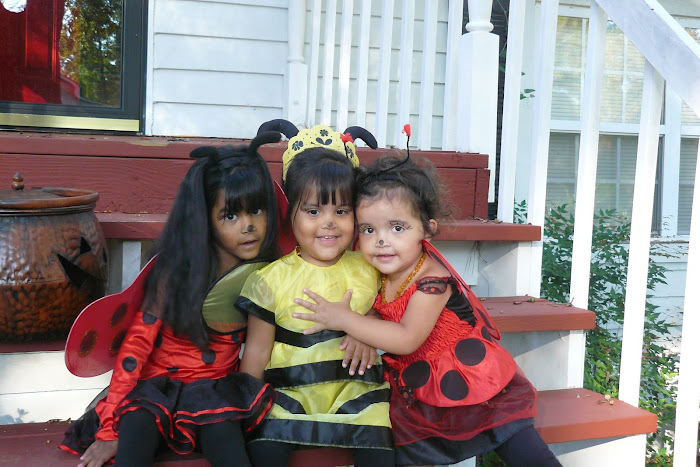 Our beautiful Lady bugs and Bumble Bee