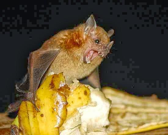 A Verdade sobre os Morcegos