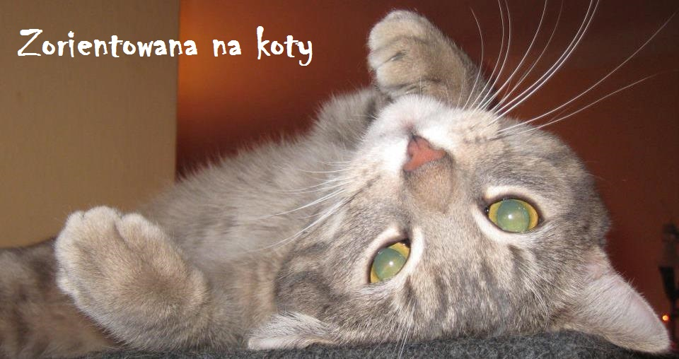 Zorientowana na koty