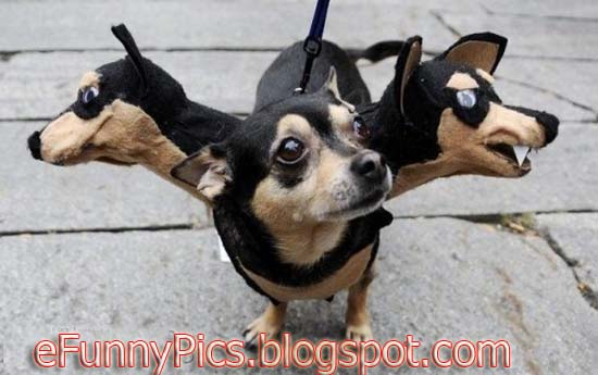 Three Head Dog
