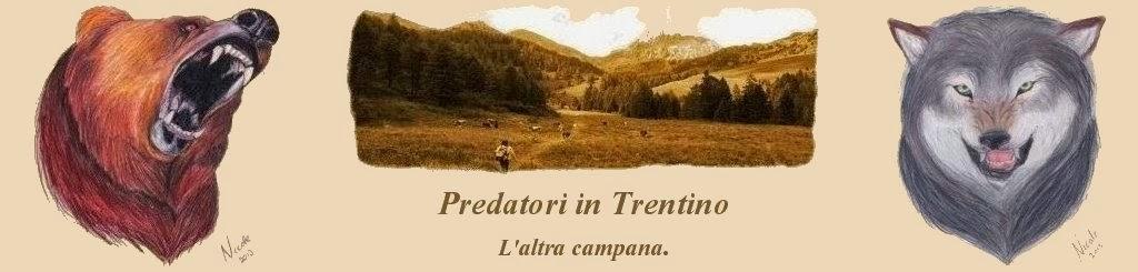 Orso in Trentino