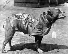 Sergant Stubby Anjing-Anjing Pemberi Inspirasi