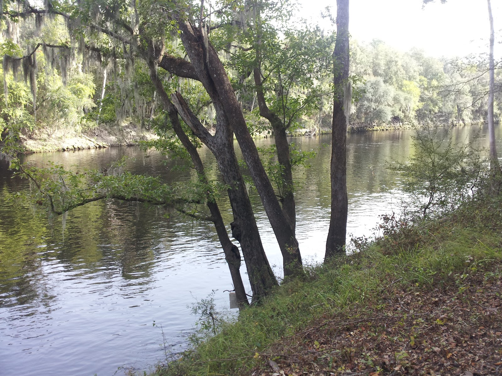 "suwannee guys If you are looking to get back to nature and enjoy the ""real florida"", suwannee river is definitely the place to be now is the perfect time to enjoy all that is offered at suwannee river state park."
