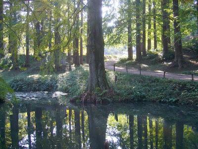 大阪府交野市・大阪市立大学 理学部付属 森の植物園へようこそ