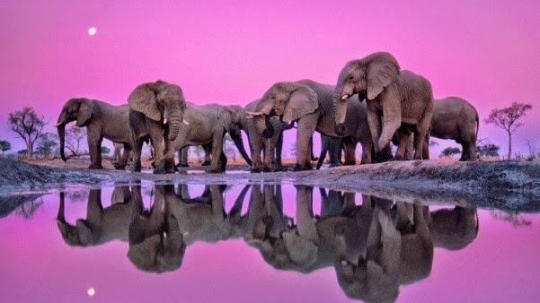 Imagens de elefante