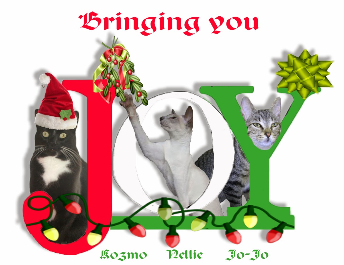 xmas card from Nellie,Kozmo and Jo-Jo