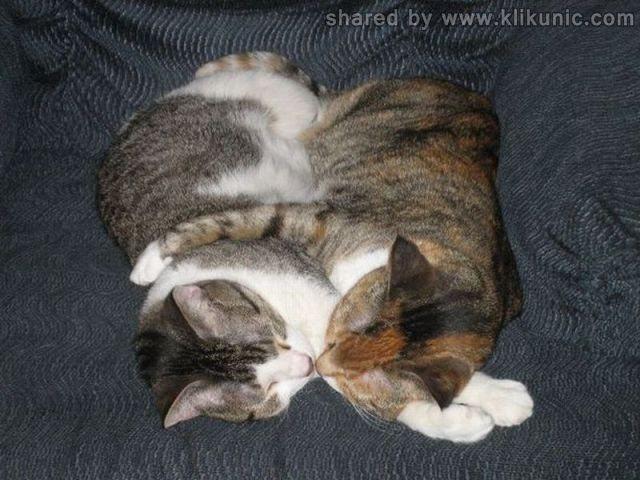 http://1.bp.blogspot.com/-MJTZq8kZXBU/TXlnID6VyuI/AAAAAAAAQyo/wNS3-HAgNxk/s1600/these_funny_animals_635_640_03.jpg