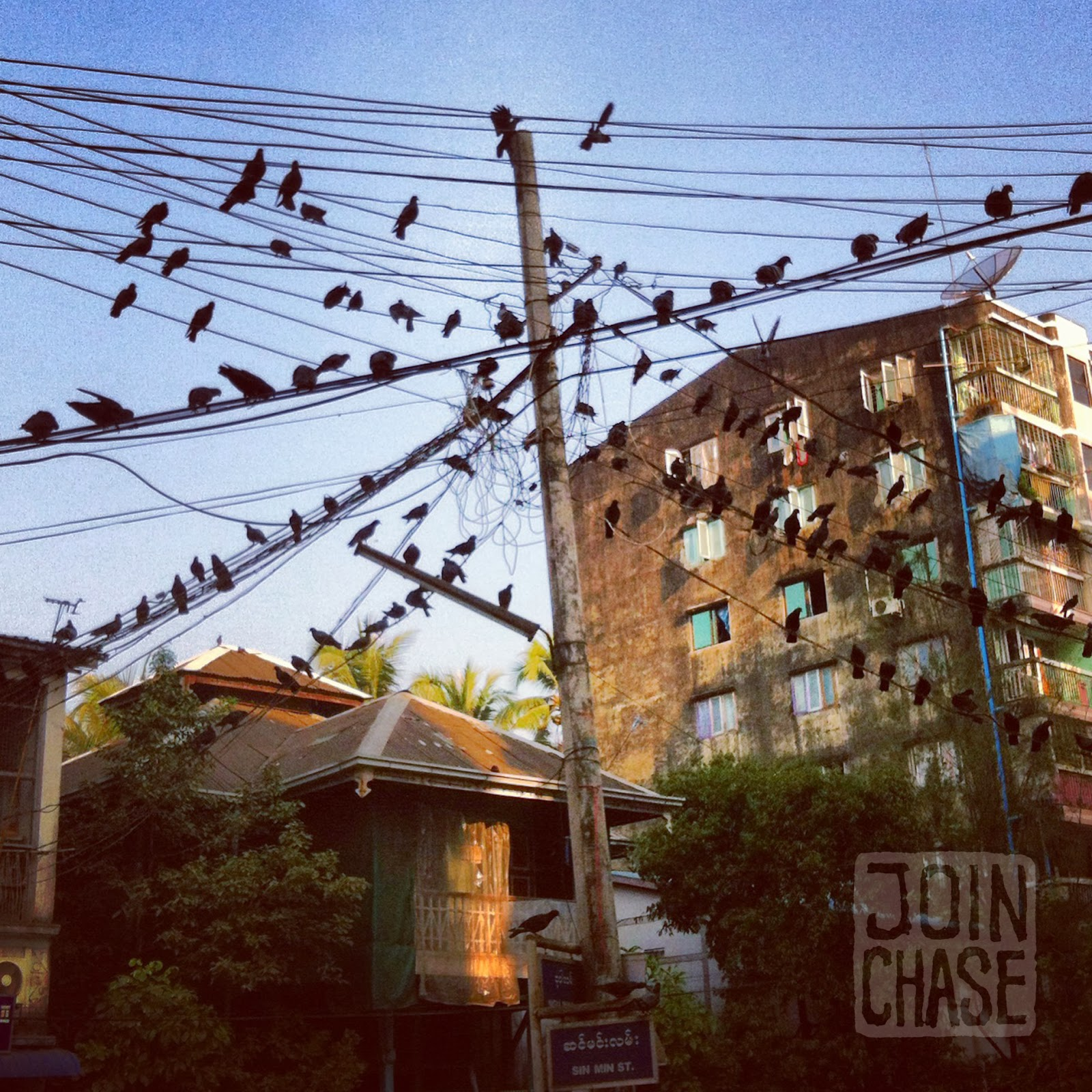 Pigeons on power lines in Ahlone Township, Yangon, Myanmar.