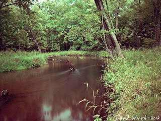 smooth flowing river, forest, sand, trees