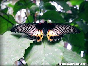 Arimbawa Photograph
