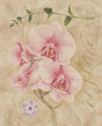 Laminas con flores para imprimir imagenes y dibujos para for Laminas para cuadros para imprimir