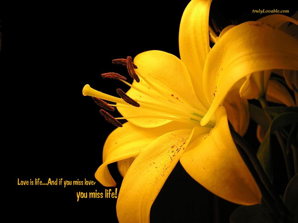 http://1.bp.blogspot.com/-MK4XwkkJT-U/TcRKFrruLoI/AAAAAAAACA4/vxV_YF-6v3I/s1600/1330-if-you-miss-love.jpg