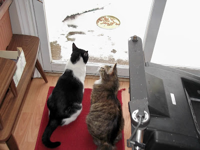 two cats looking out of window