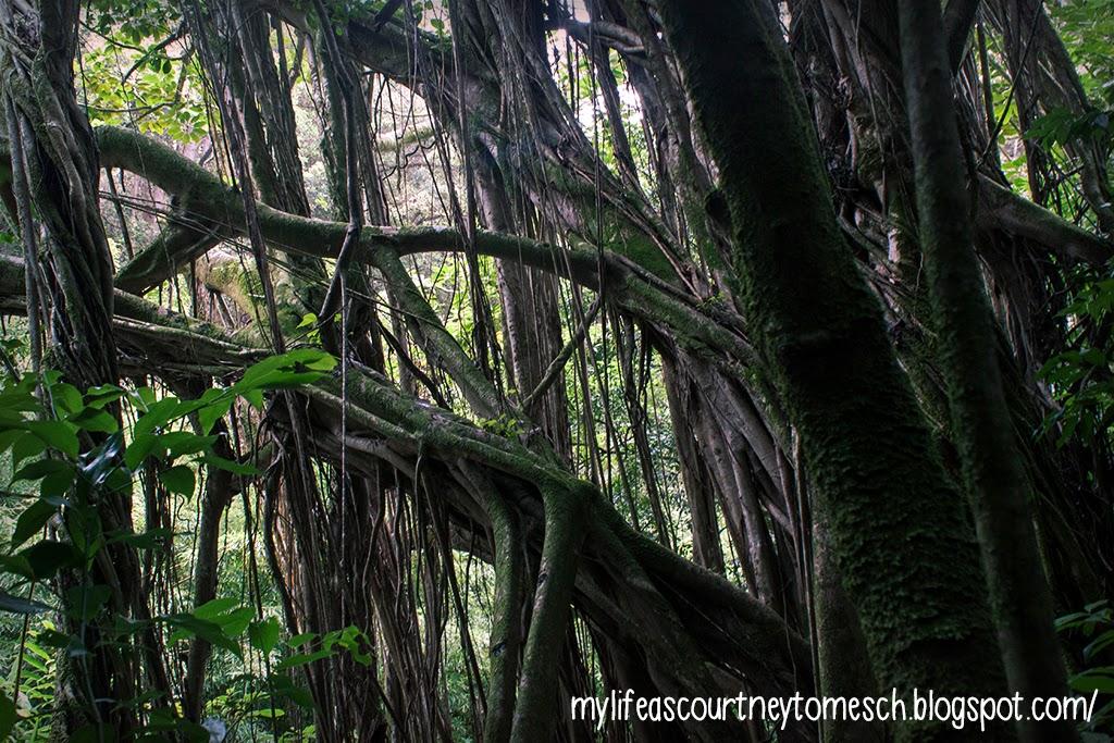 Oahu Hawaii Jude Trail Lost Location